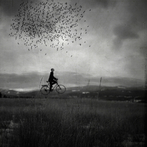 artchipel:  Joel Robison | Boy Wonder (Canada) - B is for Bird Powered Bicycle [more Joel Robison | artist found at uruouru]