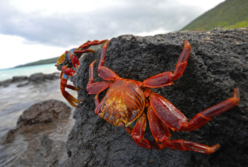 Crab's eye view