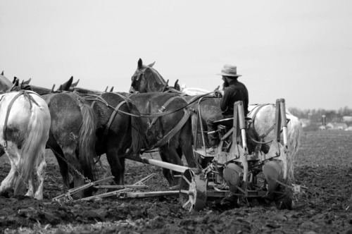 Amish farmer plowing-Lancaster County Pennsylvania ©2010 D R Nicholson All rights reserved. Reblogging permitted with © credit.