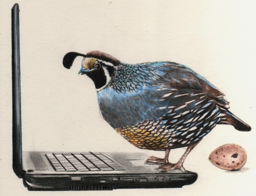 E-QUAIL (V.) 'ee-kwayl  To feel dread upon receiving an email from a hostile or irksome source, and to resist opening it for fear it might contain distressing or irritating news, or increase your workload. Usage:  When a message from his boss landed in his inbox, Rowan e-quailed and scrolled down the screen so he wouldn't have to even look at it. §-An egret's plume to Cressida for the concept. Text © Liesl Schillinger 4/2/2009 Image ©Elizabeth Zechel, 4/9/2012