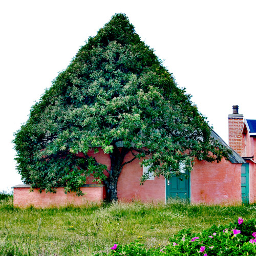 —bizarre tree captured by photographer Marianne Kjølner (via colossal)