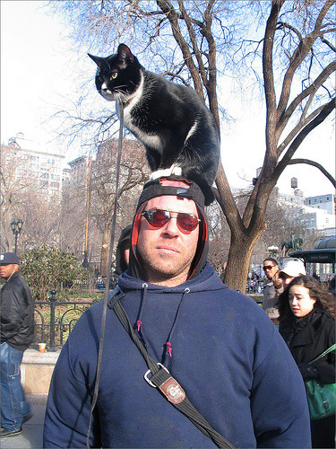 What kind of cat would be a hat like that?!