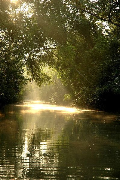 gounesco:  The Sundarbans National Park is a National Park, tiger teserve, and a Biosphere Reserve located in the Sundarbans delta in the Indian state of West Bengal. This region is densely covered by mangrove forests, and is one of the largest reserves for the Bengal tiger. The Sundarbans is the largest single block of tidal halophytic mangrove forest in the world. It is a UNESCO World Heritage Site covering parts of India and Bangladesh. The name Sunderbans may have been derived from the Sundari trees that are found in Sundarbans in large numbers. Alternatively, it has been proposed that the name is a corruption of Samudraban or Chandra-bandhe (name of a primitive tribe). But the generally accepted view is the one associated with Sundari trees. (source - wikipedia)