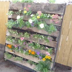 "PALLETS!   Yep that's right, the up-cycling phenomenon has boomed! In the united states we destroy roughly 2/3 of all pallets used. The sad part is most of these pallets are used once! That's a lot of lumber and DIY projects being shredded and thrown in the dump for no reason!  Here at B*A*D we dislike waste, so we have found at least 12 projects that are super simple and done with pallets that have been dismantled.  If you are interested google ""Upcycled pallets"" to see the countless options.   A great way to get pallets is to call manufacturing companies, shipping warehouses, and packing warehouses an ask if the have scrap or unneeded pallets. I know from experience that most places will be grateful to get rid of them especially in the early spring during their harvest cleanup."