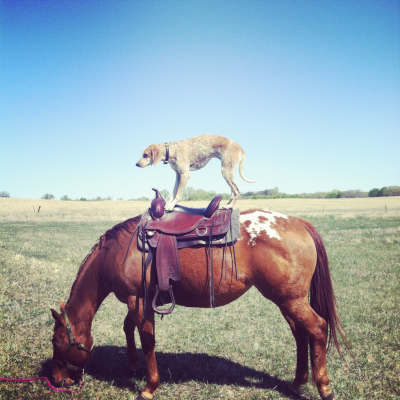 maddieonthings:  Mission Hill, SD  Maddie the cowgirl?
