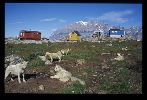 summer in Greenland.