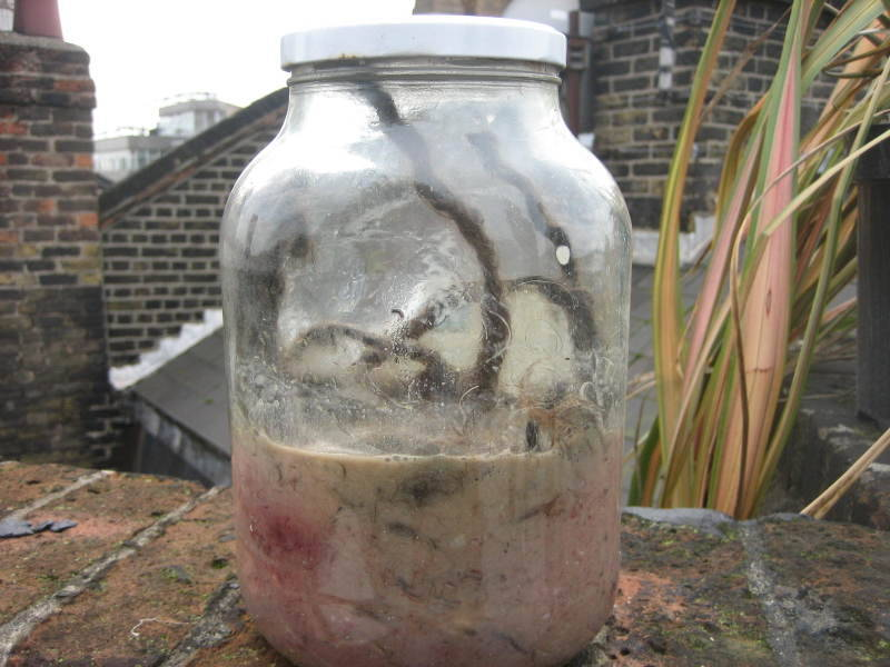 Gross Jar: The Second Coming Yesterday, Christians remembered Jesus's resurrection. Today, we are announcing the resurrection of our own sort of Christ, the Gross Jar. Long-time readers might remember the Gross Jar, but if you're new here and not very good at figuring stuff out, here's a breakdown of the concept: We take gross stuff, and put it in a jar. We laid the last incarnation (this is our third Jar) of the Gross Jar to rest about five years ago, when the stench and consistency had crescendoed and it was apparent to anyone who stuck their face in it that the unholy cocktail was in its twilight years. Rather than drag out its demise, we put it down with dignity, by making an intern tie-dye a bunch of shirts with it.  Here are some pictures of old gross jars. They contained stuff like dreadlocks, cum, period blood, facial scabs, dead pigeons, cockroaches, vomit… ya know, gross stuff. Gross stuff people wouldn't usually put inside jars for safe keeping.  And here is a photo of someone sitting on the roof of the US office wearing the limited-edition Gross Jar t-shirt. Continue