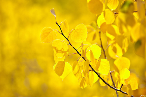 sapphire1707:  Yellow by Extra Medium on Flickr.