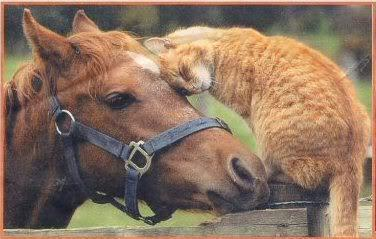 catsandhorsesthatarefriends:  Tigger the cat and his horse friend Annie.