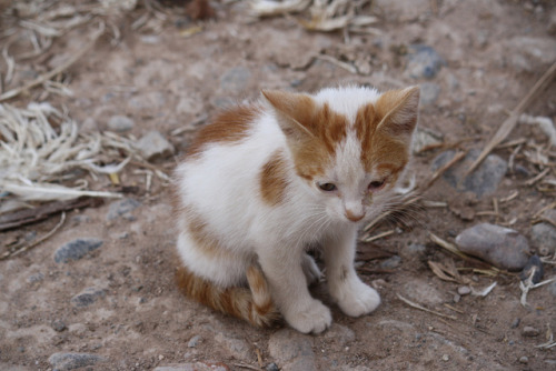 iluvprettykitties:  Tannery kitten by Gill Stafford on Flickr.