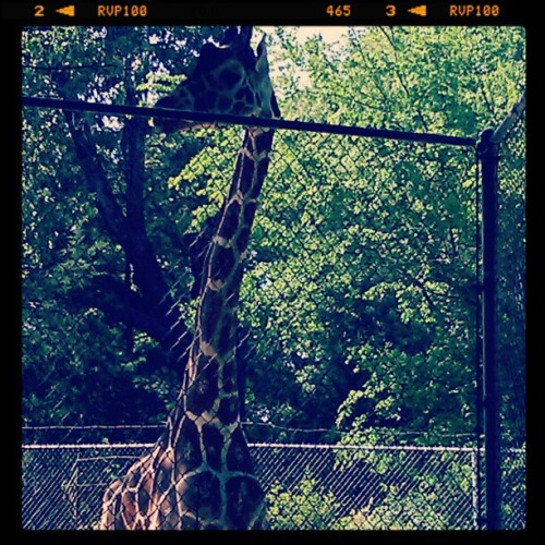 Everyday in Jafrica is a safari. #jackson #zoo #MISSISSIPPI  (Taken with instagram)