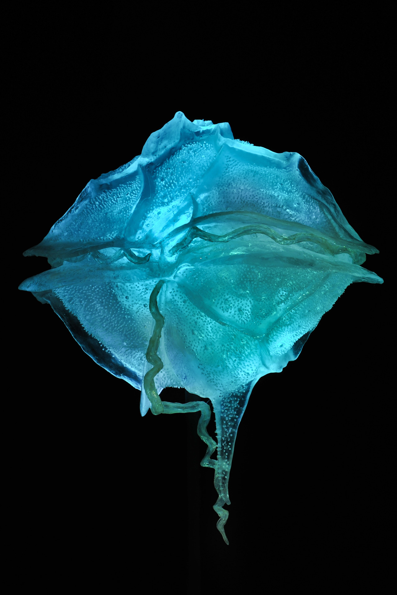amnhnyc:  Dinoflagellates are single-celled organisms that live in lakes, rivers, and oceans. Some species that live in the ocean flash on contact. This dinoflagellate model (11,000 times life size!) can be seen in Creatures of Light.  Photo by Denis