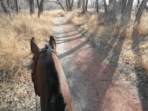 On our trail ride yesterday!