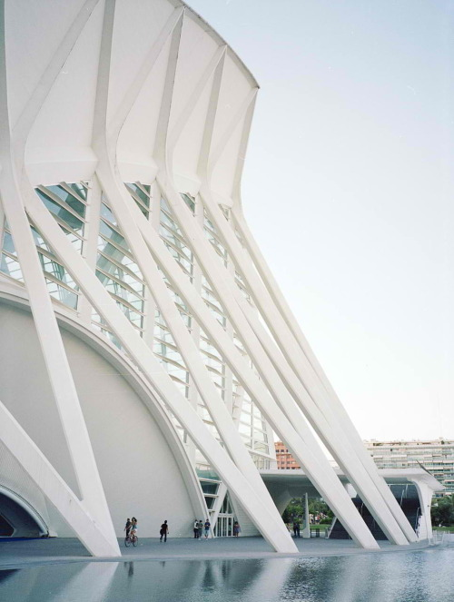 simplypi:  Príncipe Felipe Science Museum / Santiago Calatrava  walked under this yesterday.  my links to calatrava are stronger than ever.