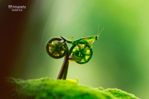 jacquesofalltrades:   Drop dead amazing photo of what appears to be an insect on a bicycle (seriously).