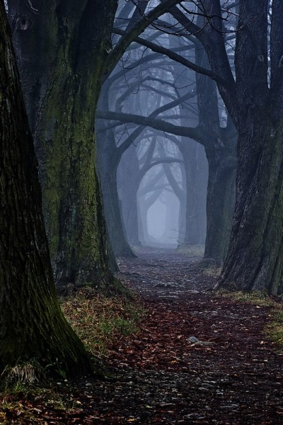 The dark forest path, by DjLuke9.