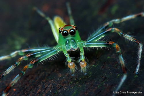 adorablespiders:  green with envy