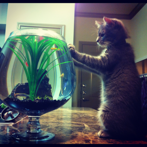 Teddy enjoying the new fish!
