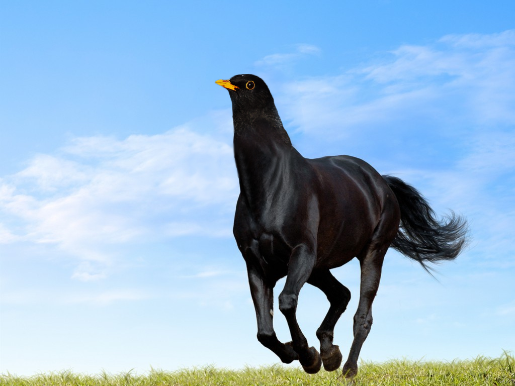 joshishollywood:  Does birdhorse exhibit both the careful wild majesty and power of a horse and the unadulterated twitchiness of a bird Like, does birdhorse stand there pawing at the ground nervously and trotting forward, then stopping dead in its tracks and darting its head in six different directions, sideways and back Then does birdhorse rapidly hop forward six steps and then five more steps and then another six How much dirt would birdhorse kick up having the lightfooted agility of a bird while still weighing roughly as much as an average horse Does birdhorse lay eggs I have questions. About birdhorse We just don't have the technology to figure out birdhorse
