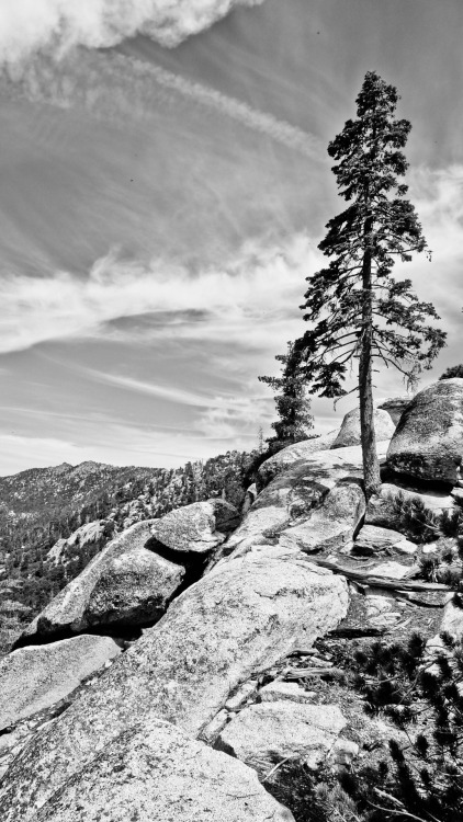 marion mountain trail @ mount san jacinto state park. idyllwild, california, usa. 2012.