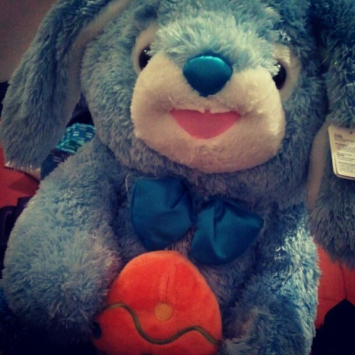 Cutest bunny ever<3 (Taken with instagram)