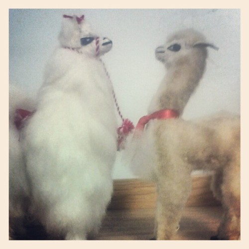 #cute #llama #friends #love #odd (Taken with instagram)