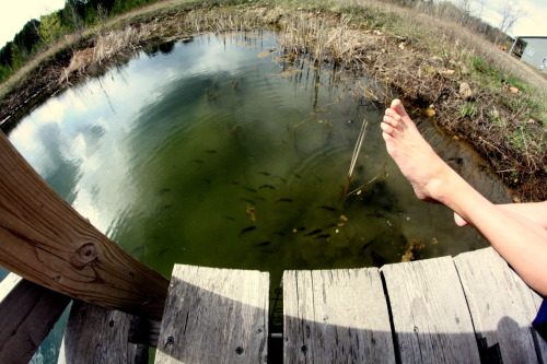 fish through a fisheye lens :x