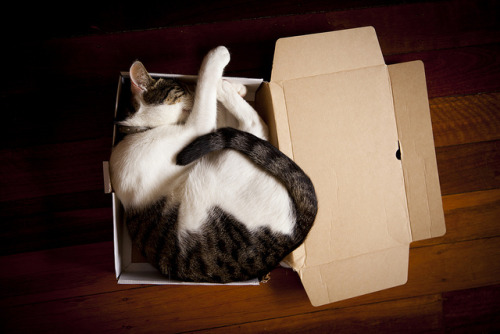 89cats:  Cat in a box. by voidboi on Flickr.