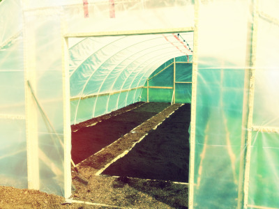 nicolefaires:  Greenhouse #2 is almost done except the door. The raised beds are done, the paths mulched. How do we use permaculture principles on a production farm? The raised beds will never be turned or tilled, we use natural mulches like leaves that come from our region only. We grow a diversity of crops, as many of them companion planted as possible. We build the soil, and conseve and reuse water. We grow year-round through the use of plastic in order to decrease our dependence on foreign production and petroleum, and we use no petroleum for producing the food, just delivering it. The real challenge is that as a SPIN farm, we have to travel to our farm plots. This is technically a Zone 3 area that we have to farm like a Zone 1 area in order to keep production high. To allleviate this we try to farm smart - using worms to help us compost faster and reduce turning, mulching, keeping on top of weeds before they seed, building the soil to make our plants more resistant, and putting in some timed irrigation. This is the future of food production. For the curious, this greenhouse cost about $450 for 20 x 40. The basic materials are PVC, 2x4's, and 6 mil plastic. It would not last well in a place that gets heavy snow, but it wouldn't cost much more to invest in metal electrical conduit instead of PVC.