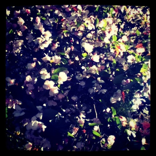 #pretty #nature #flowers #beauty  (Taken with instagram)