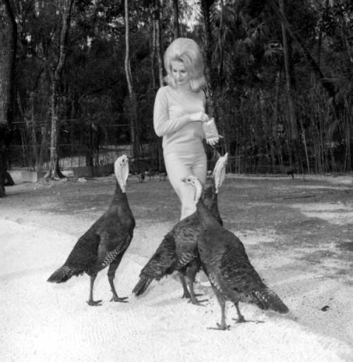 Unidentified woman feeds turkeys. - Homosassa Springs, Florida, 1960s. Source: Florida Memory, Department of Commerce collection