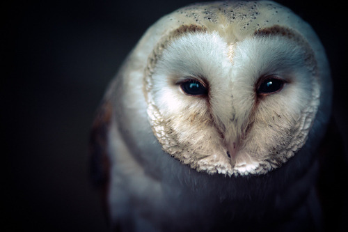 Owls are amazing