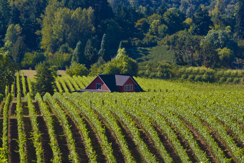 Nestled in Wine Country by longfamilytales on Flickr.Peek a Boo!