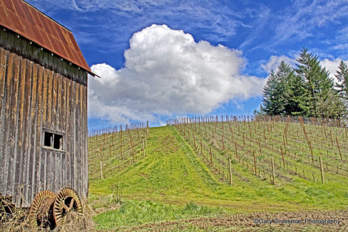 "Oregon Wine Country by Gary Grossman on Flickr.Oregon Wine Country… and an AMAZING shot.. make sure to view the photo ""large"""