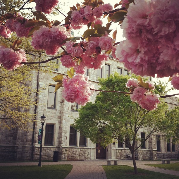 My alma mater. loyolamaryland:  Beatty Hall, flowering trees in bloom. #higheredstagram #campus #loyola #loyolamaryland #university #college #sunset (Taken with instagram)