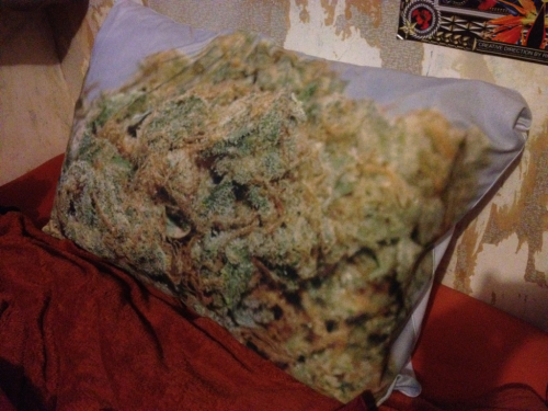 the-trees-are-burning:  Sleeping on dank