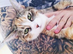 I love cats and tattoos (on other people).