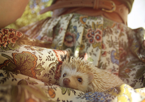 thosepaperscut:  OK, it's official. I need to own a hedgehog and its name need to be Martin.  but actually Alanna we're going to have a hedgehog in our house next year. you're in charge of finding out where to get it. (mostly actually serious)