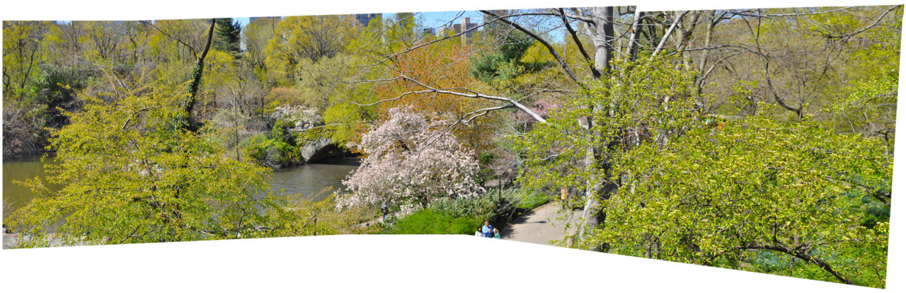 Central Park in bloom - NYC