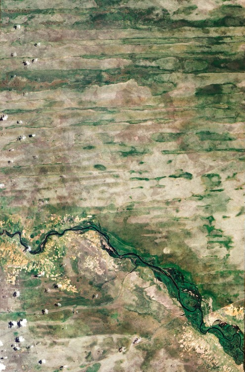 "Linear Dunes of the Caprivi Strip Natural-color image of the Caprivi Strip northeastern Namibia. On the bottom of the image there is the Okavango River. Caprivi Strip is a stretch of land that ""receives more than 600 millimeters (24 inches) of mean annual rainfall and experiences periodic floods"" The stripes visible in the images are linear dunes:  ""[…] some are more than 100 kilometers (60 miles) long. Their presence suggests much drier conditions in the past. Dunes generally form from wind-blown sand over many years. One characteristic of linear dunes is that they tend to remain intact long after the dry conditions cease. And because they don't migrate like marching dunes, linear dunes preserve dirt and rocks that geologists can later use to understand past conditions. A study published in 2000 sampled dunes throughout the Caprivi region and found that they likely formed under arid conditions between roughly 60,000 and 20,000 years ago. A study in 2003 concluded that dune construction may have been especially pronounced between 36,000 and 28,000 years ago. After the dunes formed, conditions in the Caprivi Strip moistened enough for the dunes to support vegetation—woodlands on the dune ridges, and grasses and shrubs in the valleys between."" (via EO)"