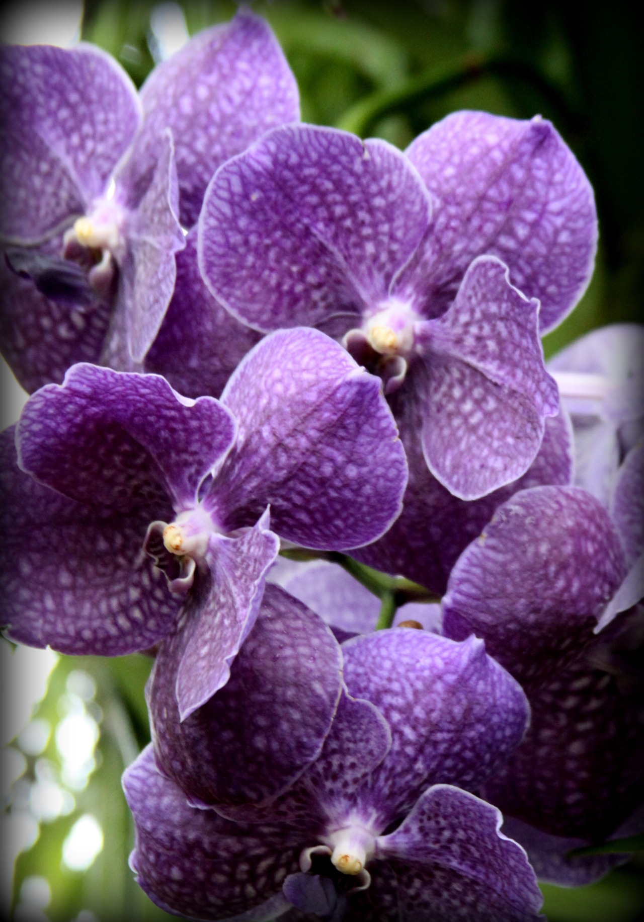dianaisadoramarlene:  MYTH The Greek myth of Orchis explains the origin of the plants. Orchis, the son of a nymph and a satyr, came upon a festival of Dionysios (Bacchus) in the forest. He drank too much, and attempted to rape a priestess of Dionysios. For his insult, he was torn apart by the Bacchanalians. His father prayed for him to be restored, but the gods instead changed him into a flower. Source. Photo: Charlotte York   Well, glad we got that cleared up! There are so many great myths involved in the origin of plants, which is your favorite? ~AR