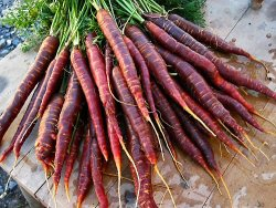 Purple carrots are all the rage at the moment, but I don't really get it. My friend's Dad thinks they keep him young, but I need more than one hand to count the number of times he's lost his glasses - only to realise they were on his face… Anyway, I made a purple carrot cake using Donna Hay's recipe because I did get swept up in the novelty of them. Yummo!