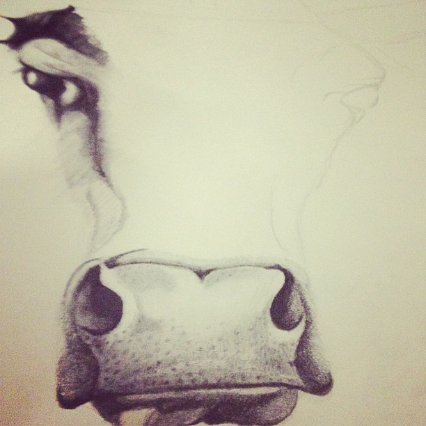 How now brown cow? #art #drawing #graphite (Taken with instagram)