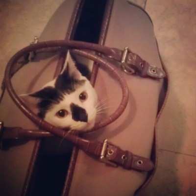 Meowcifer wants to come with me  (Taken with instagram)