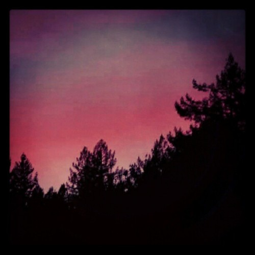 #redwoods #humboldtcounty #skies #pink #serene #beauty  (Taken with instagram)