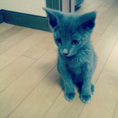 aralee911:  Little #jiji ⊙▽⊙ (Taken with instagram)