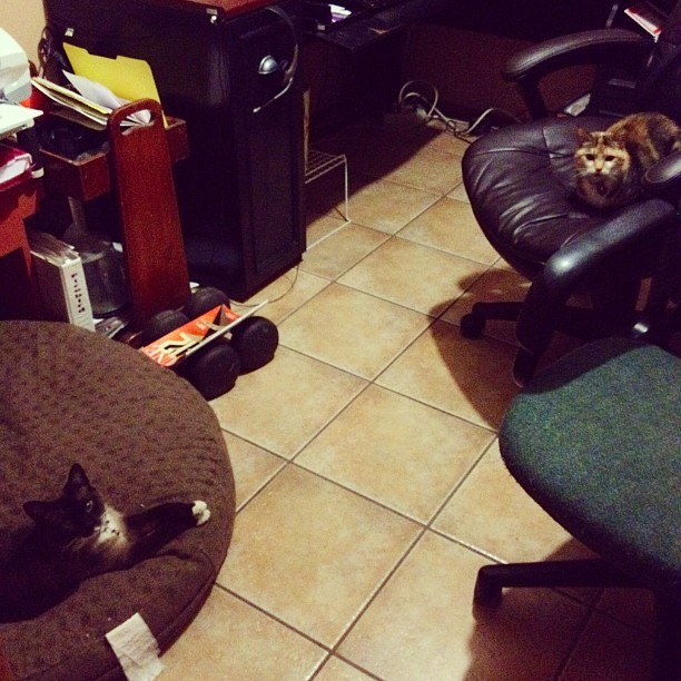 Executive #kitten meeting (Taken with instagram)