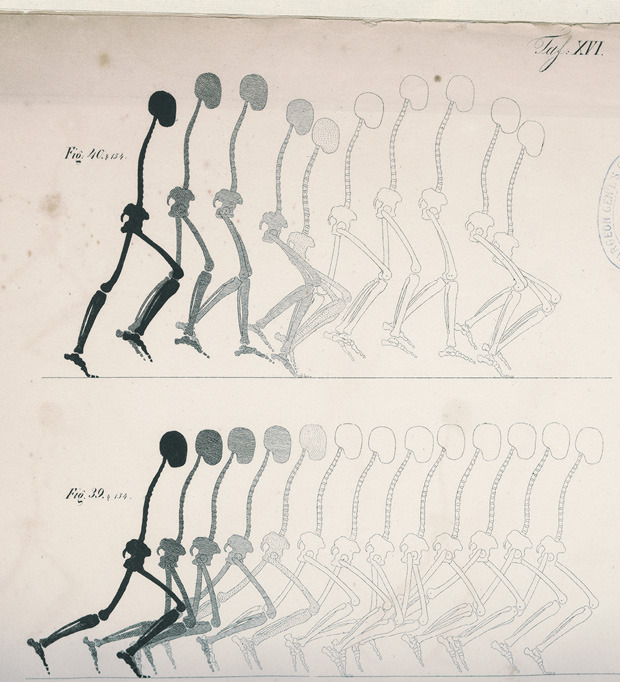 Mechanics of the Human Walking Apparatus (1836) Two figures provide a model of how the motions of running and springing can be accurately drawn.