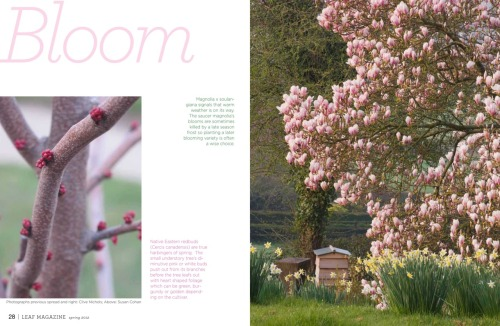 These two pages just say Spring to me!  From the current issue of Leaf.