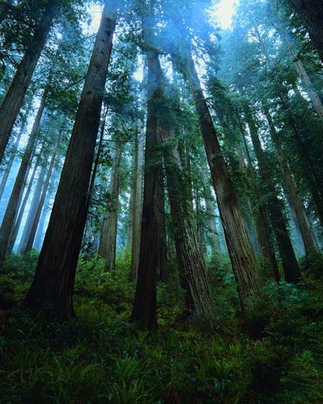 Trees are the longest living organisms on the planet and one of the earth's greatest natural resources. They keep our air supply clean, reduce noise pollution, improve water quality, help prevent erosion, provide food and building materials, create shade, and help make our landscapes look beautiful. The shade and wind buffering provided by trees reduces annual heating and cooling costs by 2.1 billion dollars. Well-maintained trees and shrubs can increase property value by up to 14%. Trees properly placed around buildings can reduce air conditioning needs by 30% A mature tree removes almost 70 times more pollution than a newly planted tree. A healthy tree can have a value of up to $10,000. The shade and wind buffering provided by trees reduces annual heating and cooling costs by 2.1 billion dollars. The shade and wind buffering provided by trees reduces annual heating and cooling costs by 2.1 billion dollars. Each average-sized tree provides an estimated $7 savings in annual environmental benefits, including energy conservation and reduced pollution. A single tree produces approximately 260 pounds of oxygen per year. That means two mature trees can supply enough oxygen annually to support a family of four! Water originating in our national forests provide drinking water for over 3400 communities, and approximately 60 million individuals. One tree can absorb as much carbon in a year as a car produces while driving 26,000 miles. Over the course its life, a single tree can absorb one ton of carbon dioxide. Protect and plant trees today.